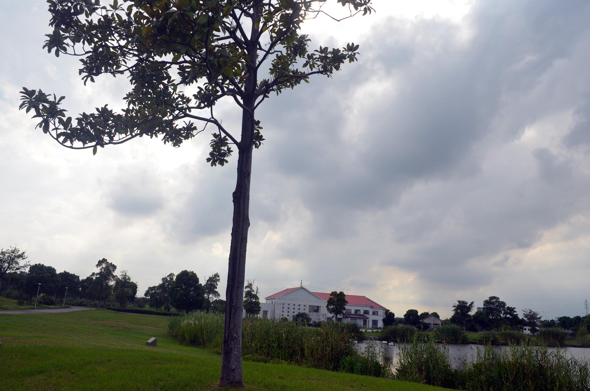 娄东生态园太仓娄东商务休闲垂钓中心风景秀丽 这里是太仓 摄影 第19张