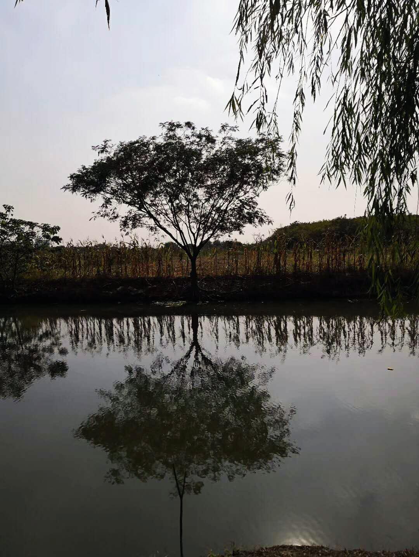 太虚-见秋意河塘边树木见道