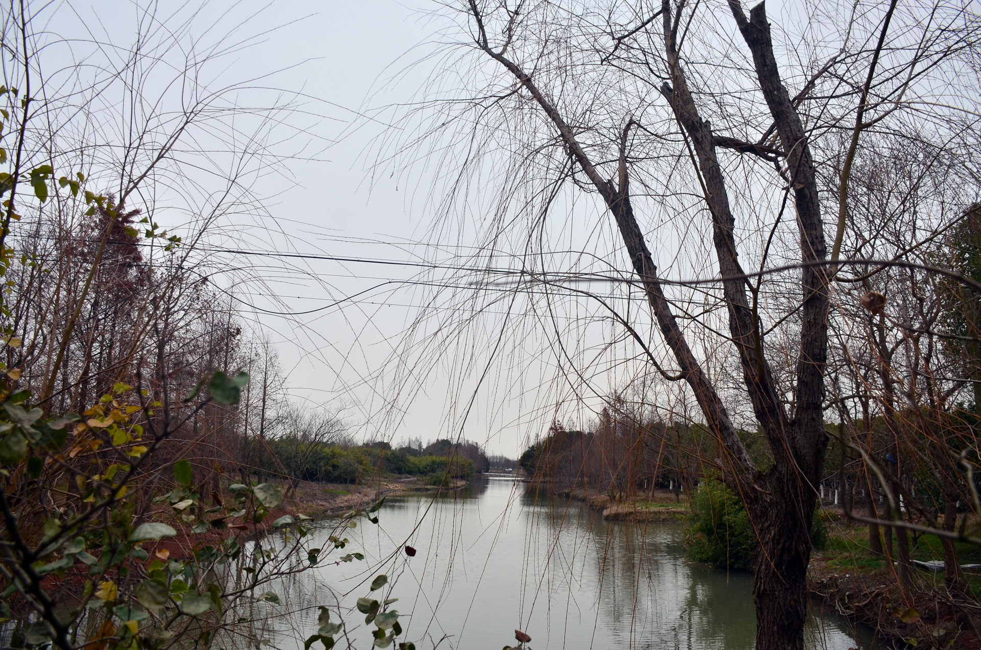 2019冬日太仓现代农业园内風蘭桥探寻