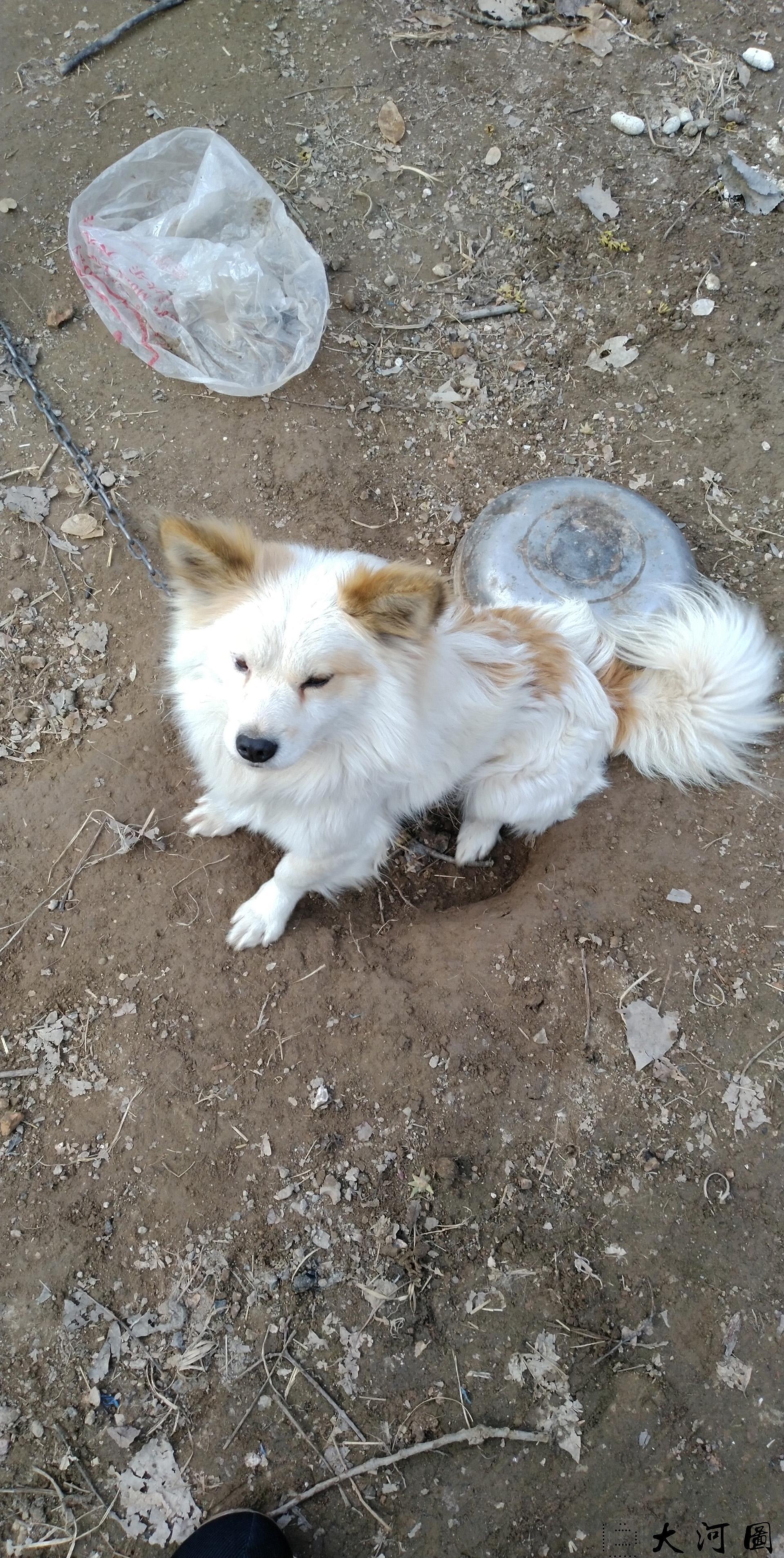 魏公的石臼和石磨盘守候它的仅一只狗