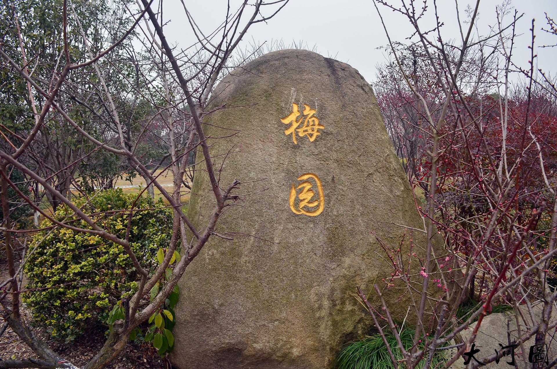 太仓梅园太仓赏看梅花的好去处(太仓现代农业园西南角) 这里是太仓 摄影 第2张