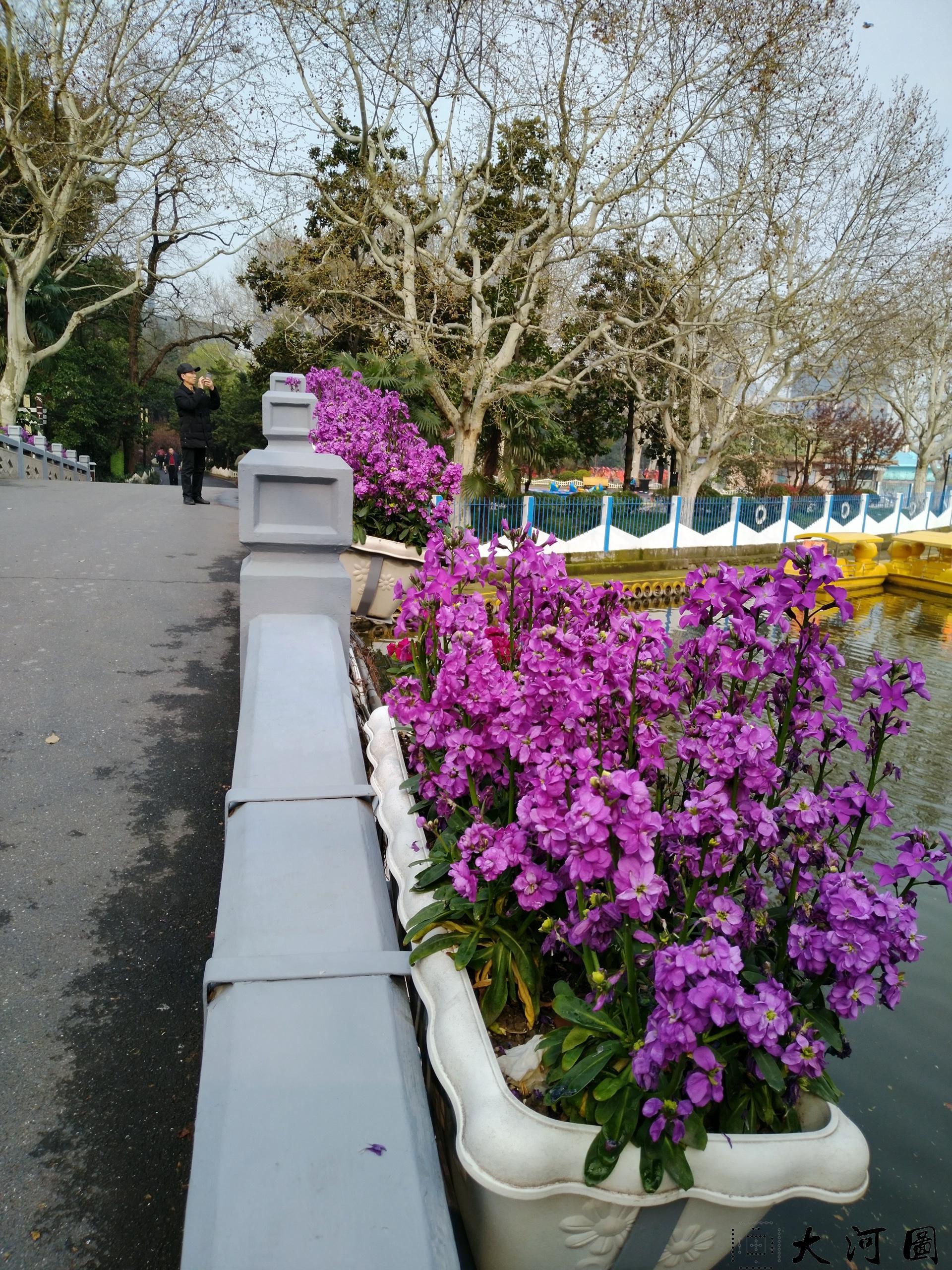 上海长风公园初春之景色幽暗灰沉 摄影 第11张