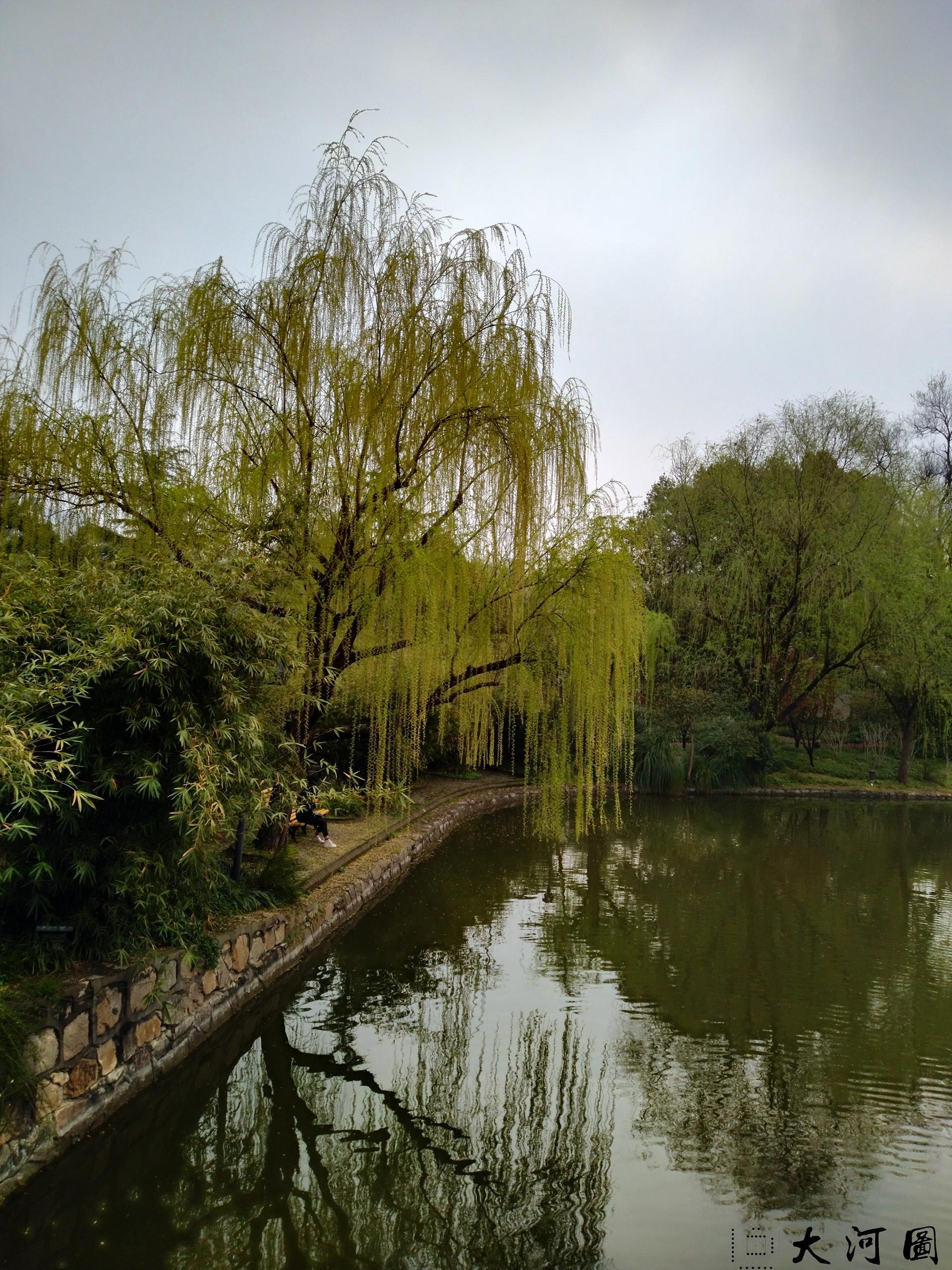 上海长风公园初春之景色幽暗灰沉 摄影 第24张